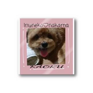 犬猫仲間かおる Stickers