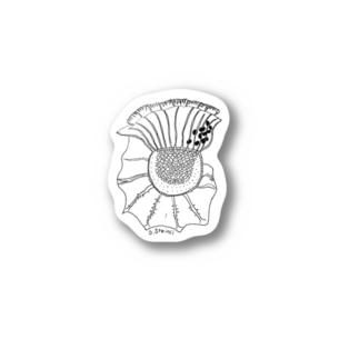 【渦鞭毛藻シリーズ】O.steinii Stickers
