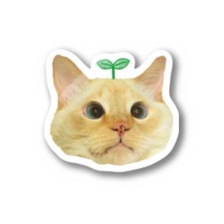 双子葉類なまりおちゃん🌱 Stickers