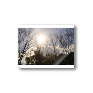 木漏れ日 Stickers