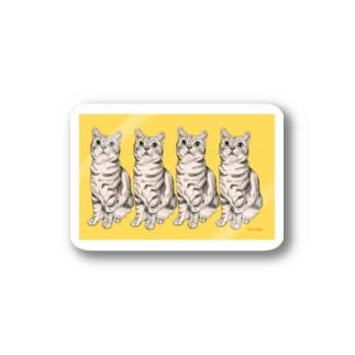 アメリカンショートヘア とーちゃくん黄色 Stickers