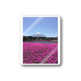 富士芝桜 Stickers