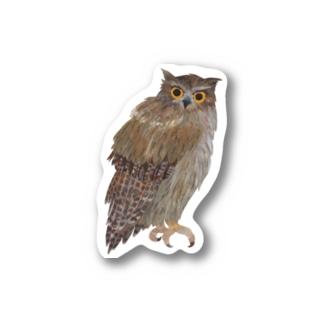 こちらを観察するシマフクロウ Stickers