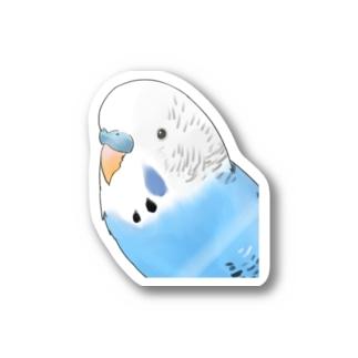 見つめるセキセイインコちゃん【まめるりはことり】 Stickers