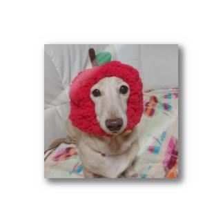 リンゴもぁ Stickers