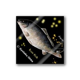 鯉!(野鯉;大鯉;巨鯉)CARP。生命たちへ感謝を捧げます。 Stickers