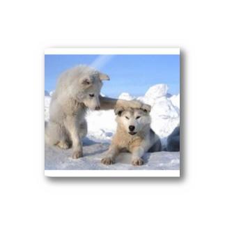 白い犬 dog park Stickers