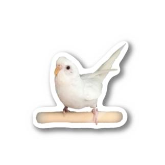 セキセイインコ「シャチホコ!」 Stickers