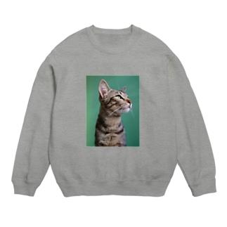 PriscilaGlassesの愛猫 タビー Sweats