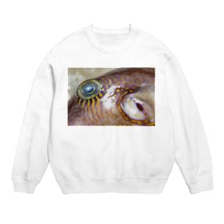 死んだ魚の目_キタマクラ_20180825_0645 Sweats