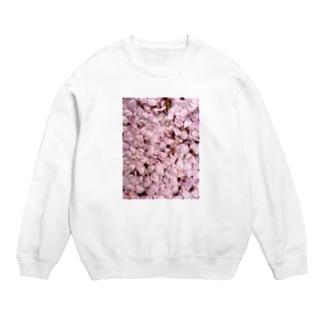 いつかの桜 Sweats