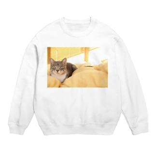 cat_20181116_0681' Sweats