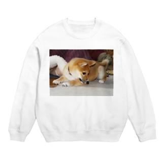 日本の犬:柴犬 Japanese dog: Shiba inu Sweats