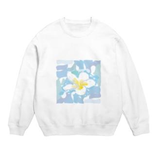 南国のハワイの白い花プルメリアPlumeria Sweats