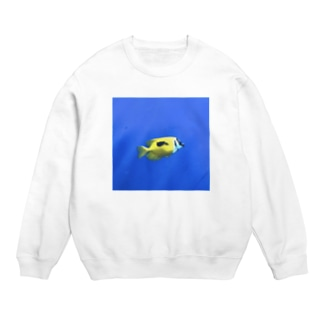 Fish&Blue Sweats