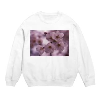 桜 サクラ cherry blossom DATA_P_092 Sweats