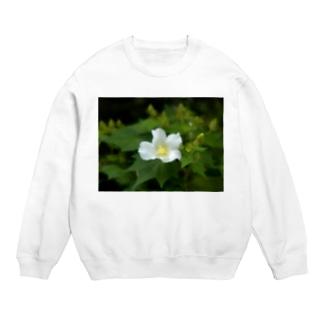 芙蓉 DATA_P_130 Confederate Rose ハスの花の古名 Sweats