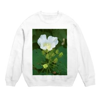 芙蓉 DATA_P_132 Confederate Rose ハスの花の古名 Sweats