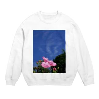 芙蓉 DATA_P_133 Confederate Rose ハスの花の古名 Sweats