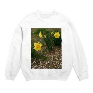 散るモノと今咲く者 DATA_P_147 水仙と桜の花びら Sweats
