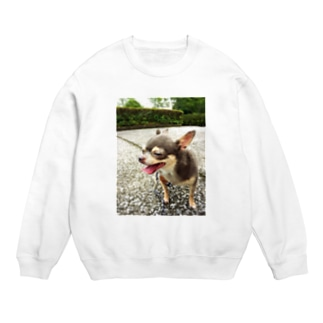 Happy         Chihuahua Sweats