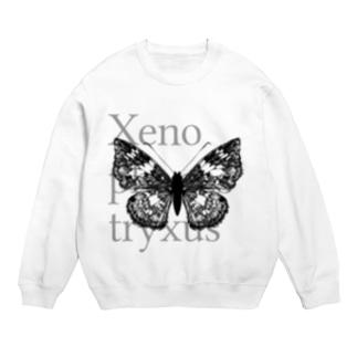 Xenophanes tryxus Sweats