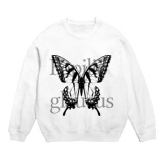 Papilio glaucus Sweats