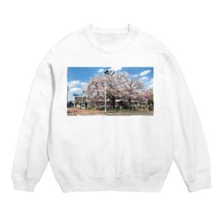 まぶしい京都の春 Sweats