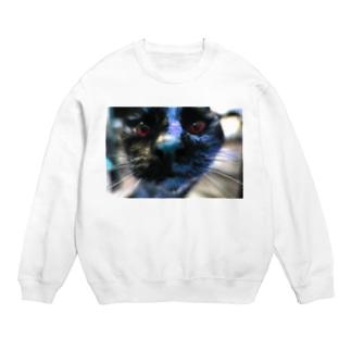 XO cat Sweats