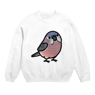 Chubby Bird アキクサインコ Sweats