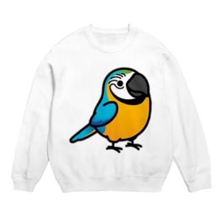 Chubby Bird ルリコンゴウインコ Sweats