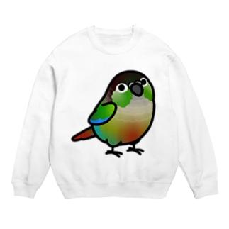 Chubby Bird ウロコインコ Sweats