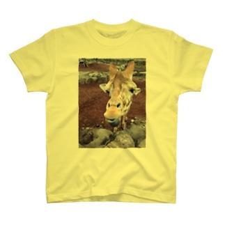 きりん Tシャツ