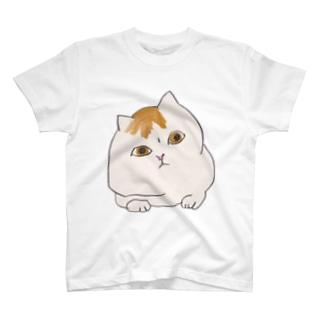 うかがいねこ Tシャツ