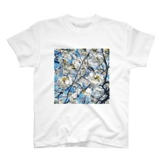 sakura Tシャツ