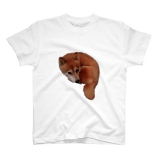ファイアーチャンマー Tシャツ