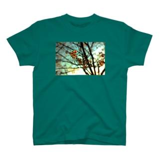 夕空と桜 Tシャツ