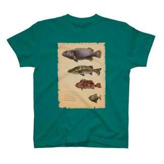 魚類画帳 T-shirts