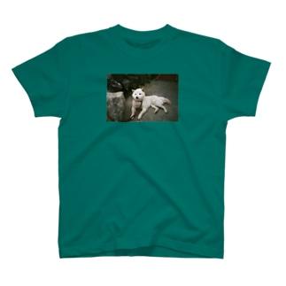 teshima no inu T-shirts