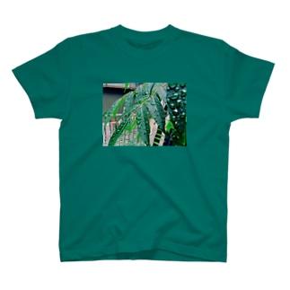 かがやくハゼくん(仮) T-shirts