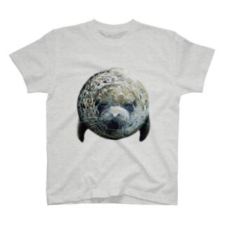 ゴマフアザラシカラー用 T-shirts