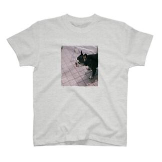 ごんのぺろいぬ T-shirts