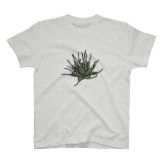 エボリスピナ Tシャツ T-shirts
