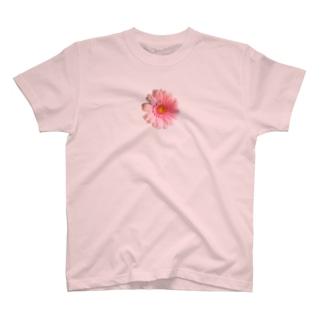 ガーベラ・ぴんく T-Shirt