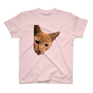 にゃんこ赤トラ T-shirts