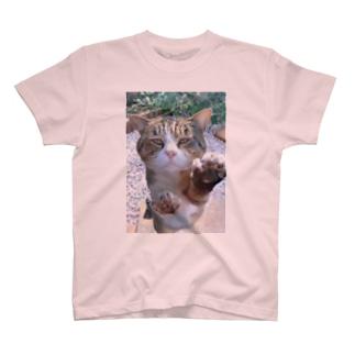 ボスネコT T-shirts