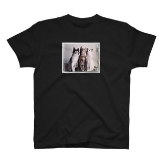 3CATS (カラーver.) T-shirts