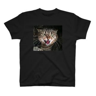 シャーネコ T-shirts