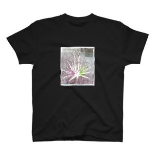 サボテン 晃山(背面プリント無し版) T-shirts