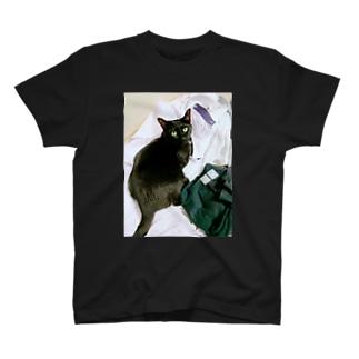 洗濯物 T-shirts